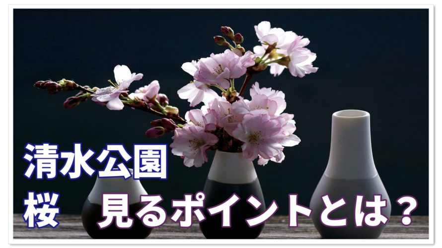 清水公園の桜情報!!ここでしか見れない桜とは!?見所は!?