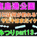 【なみつり】鹿島港公園10月に釣れる魚は⁉サビキで釣れる⁉
